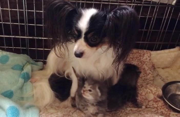 母犬と子猫