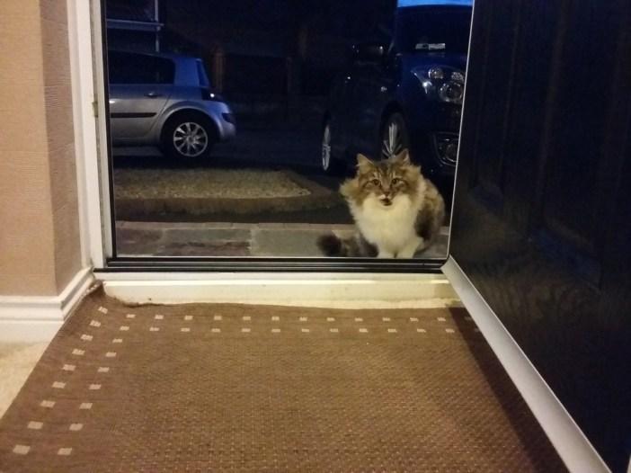 玄関に来た猫