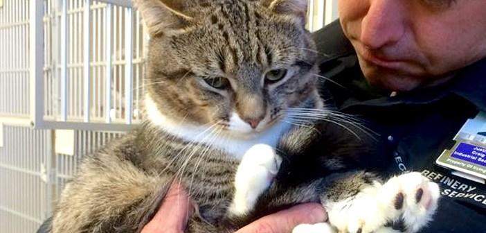 大きな手を持つ猫を家族に迎える
