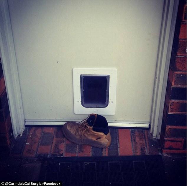 靴を持ってきた猫