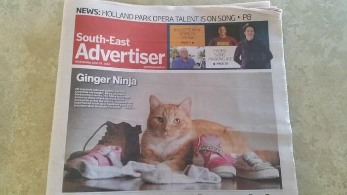 新聞に載った猫