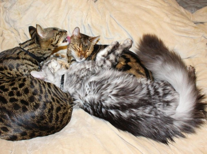 愛情いっぱいのシッポの長い猫
