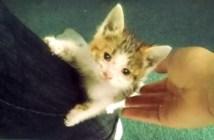 バイカーに保護された子猫