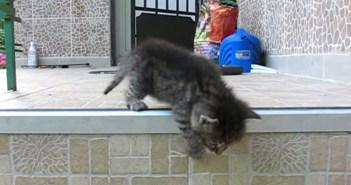 冒険に出る子猫ちゃん