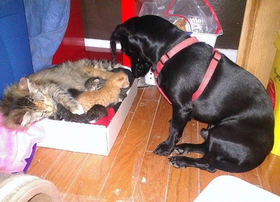 猫の親子を見守る犬