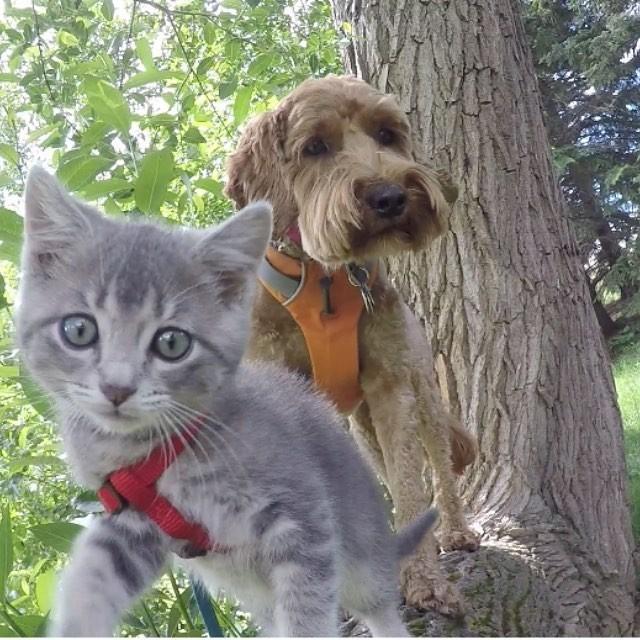 木登りする犬と子猫