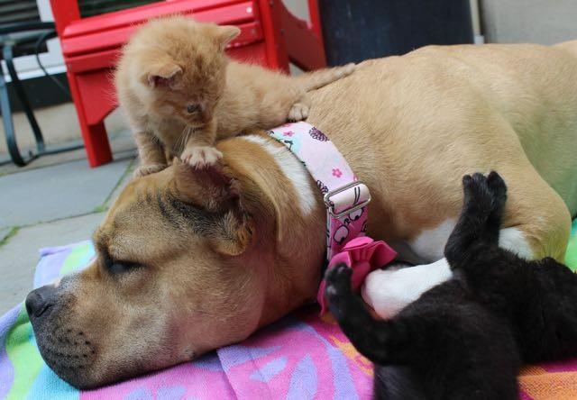 犬と遊ぶ子猫