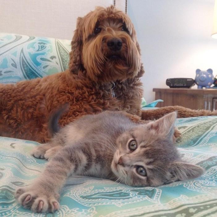 寝そべる犬と子猫