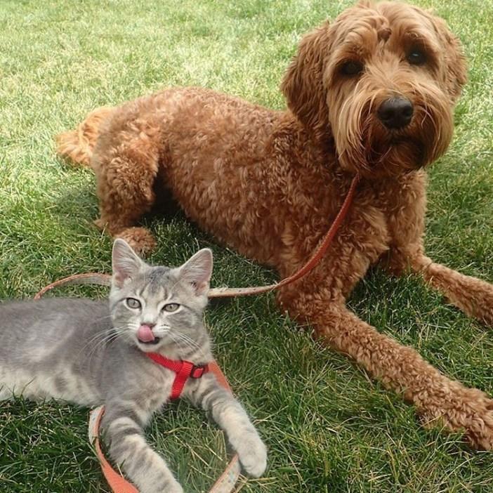 見上げる犬と子猫