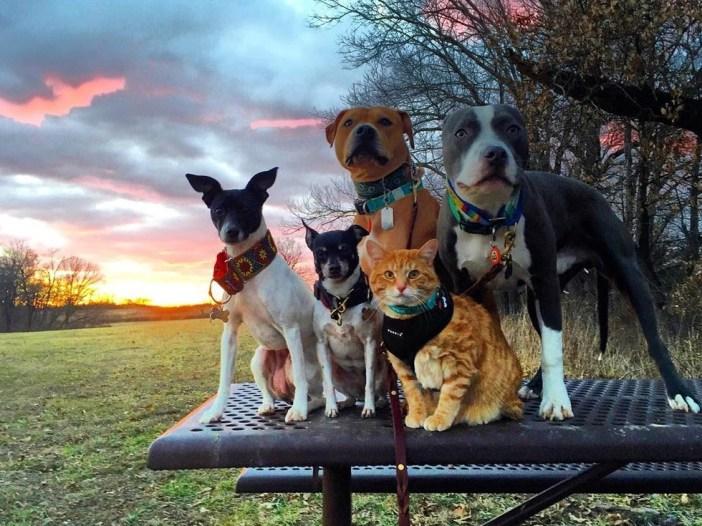 猫と犬のかっこいい写真