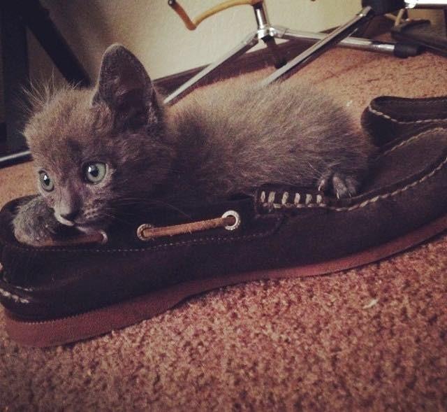 靴に乗る子猫