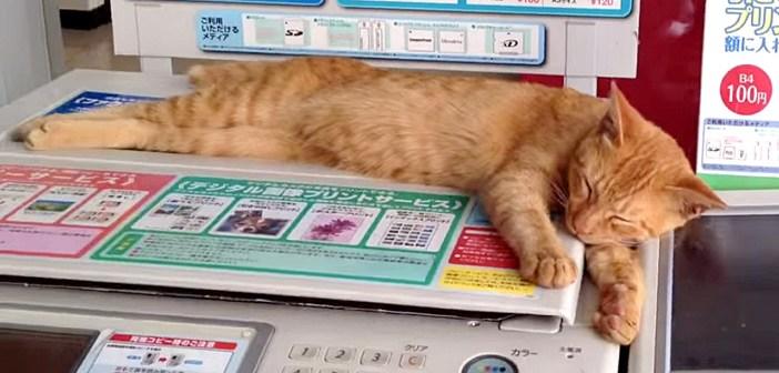 コンビニの「コピー機」で眠る猫さん。その可愛い姿にお客さんも興味津々のようで… ( *´艸`)♡