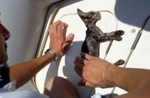 救助された子猫