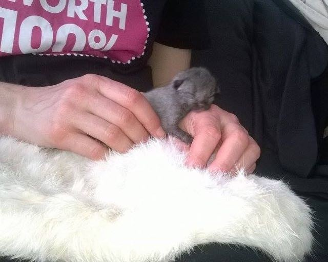 お昼寝する子猫