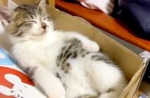 安心する猫