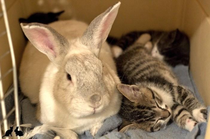 子猫を見守るウサギ