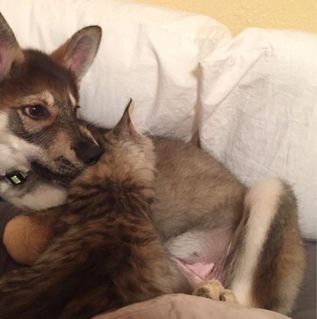 いっしょの犬と猫