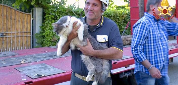 自身の32日後に助け出された猫