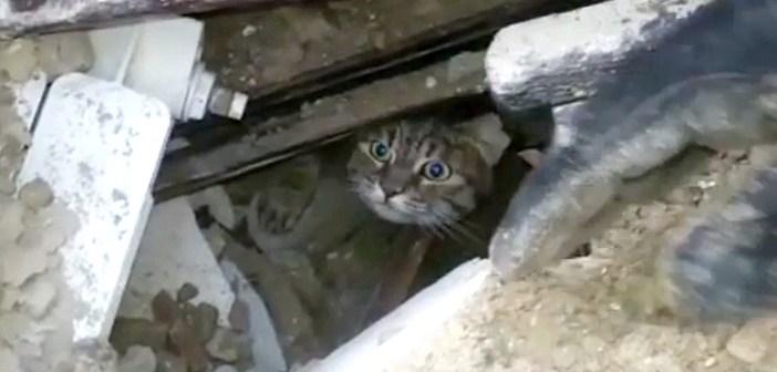 イタリア猫