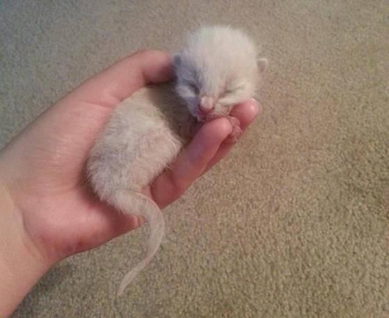 手の中の子猫