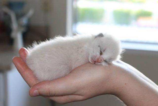 手の持たれる子猫