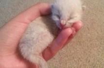 手の平の中の子猫