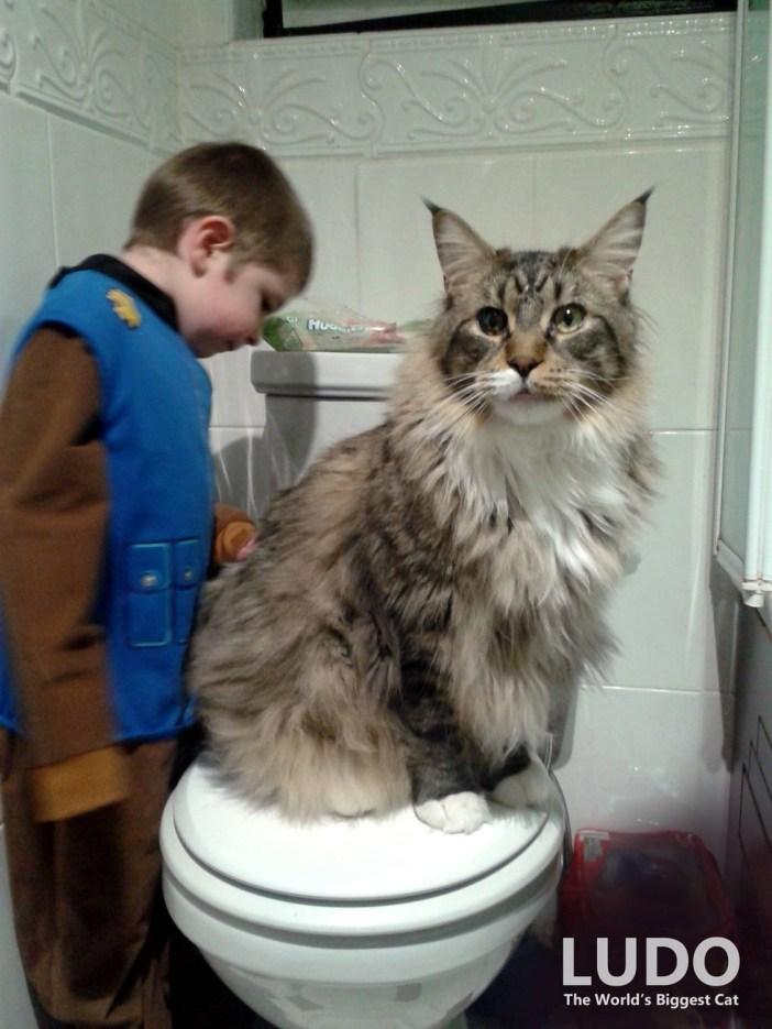 男の子と大きな猫
