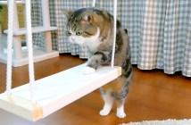 ブランコに挑戦する猫