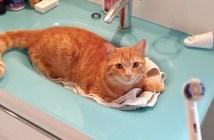 電動歯ブラシが大好きな猫