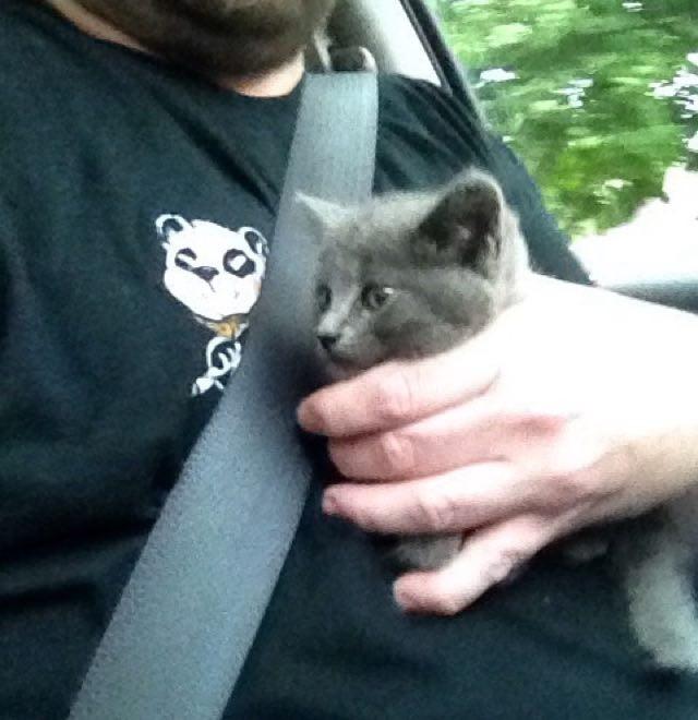 抱き抱えられる子猫