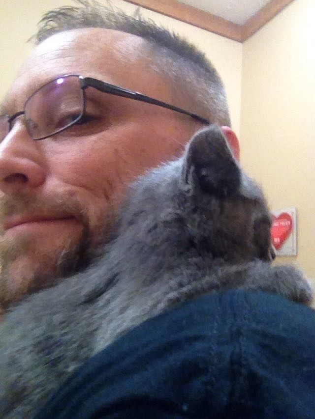 肩の乗る子猫