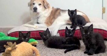 犬と子猫の戦い