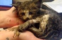 泥の中で動けなくなっていた子猫