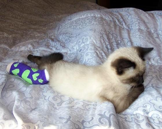 治療中の子猫。くつろぐ
