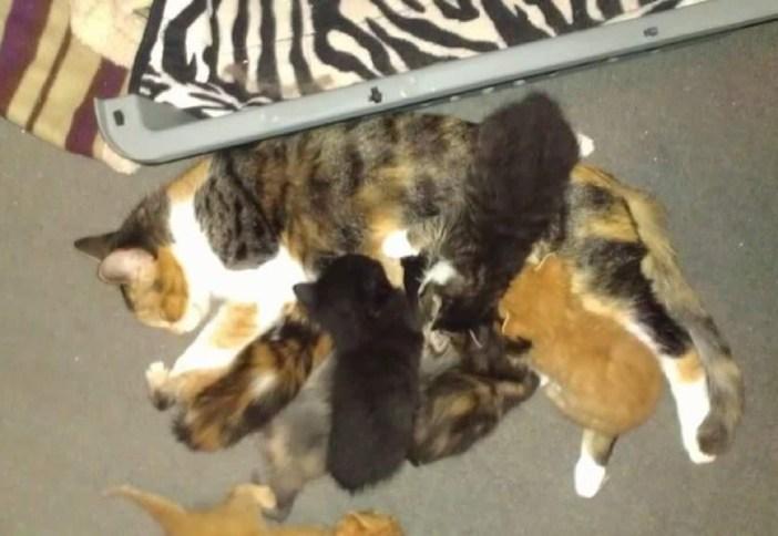 子育てをする母猫