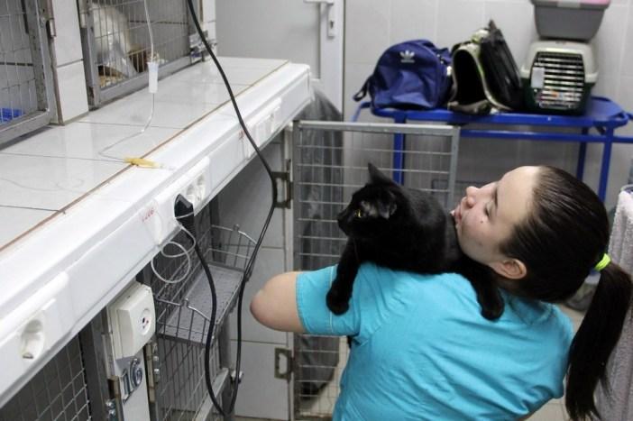 動物病院の中の猫
