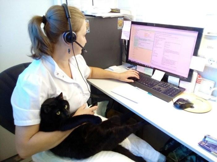 お仕事と猫