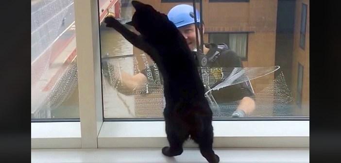 窓拭きおじさんと黒猫