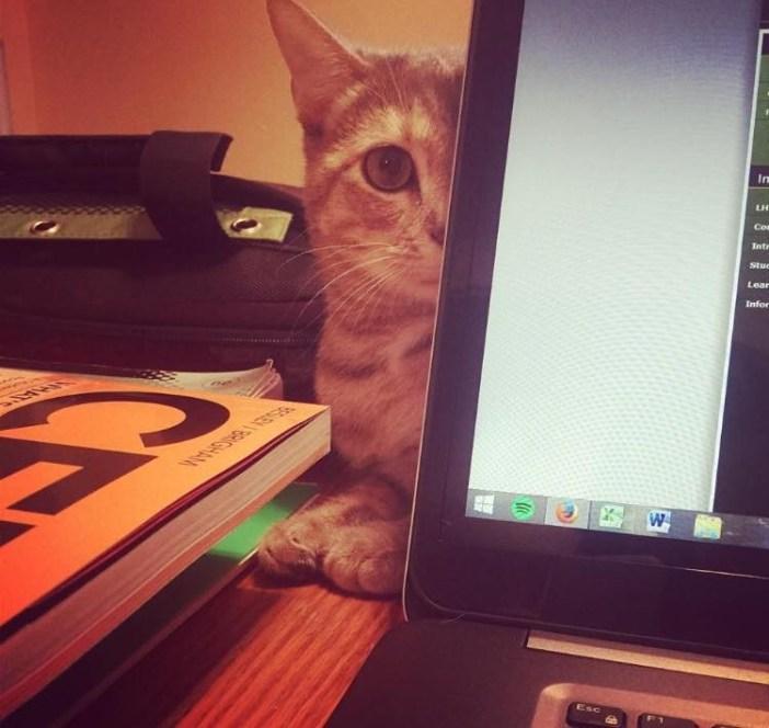 モニターの後ろの猫