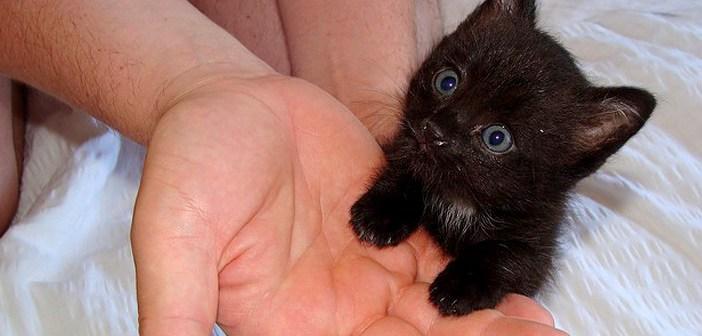 手にしがみつく子猫
