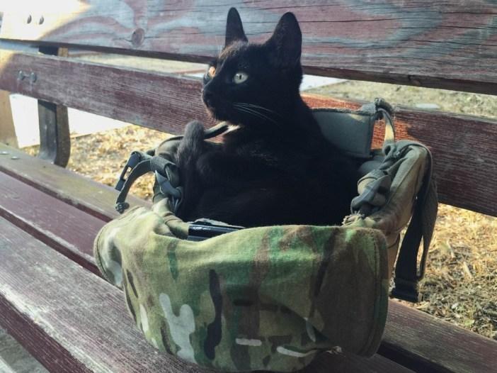 ヘルメットに座る子猫