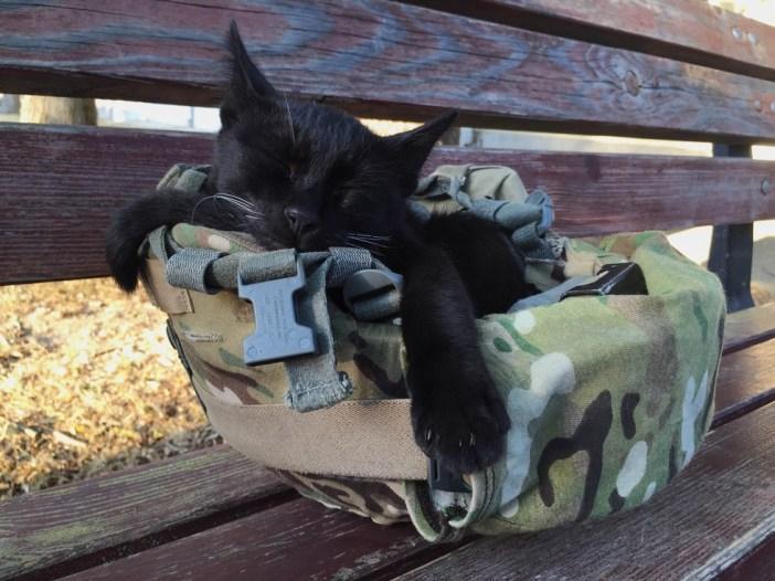 ヘルメットで眠る子猫