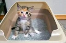 トイレ初心者の子猫ちゃん