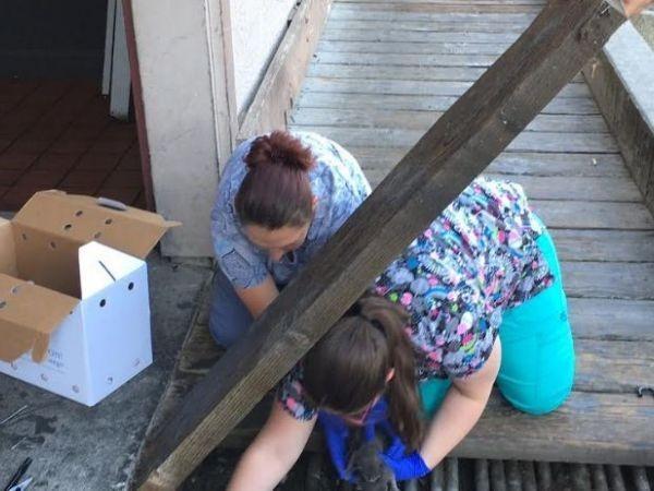 木の歩道の下から子猫を救い出す女性