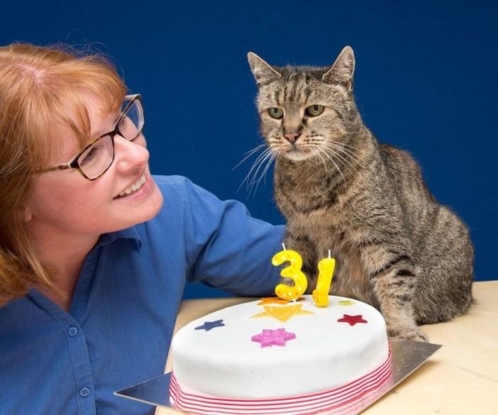 31歳の誕生日を迎えた老猫