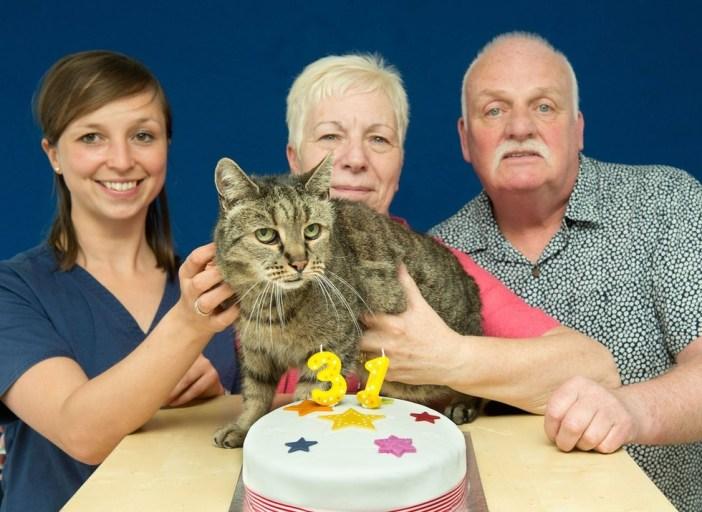 家族にお祝いされる31歳の老猫