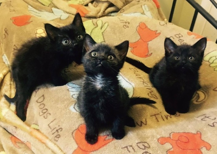 3匹で見上げる子猫