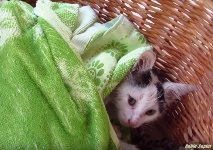 包まる子猫