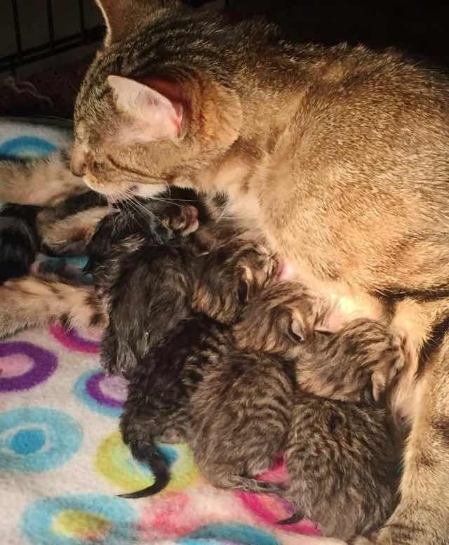 子供が生まれた母猫