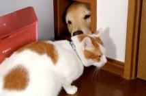 出入り口を封鎖する犬と迷う猫